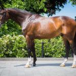paard 1